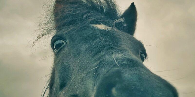 Registratie van paarden wijzigt